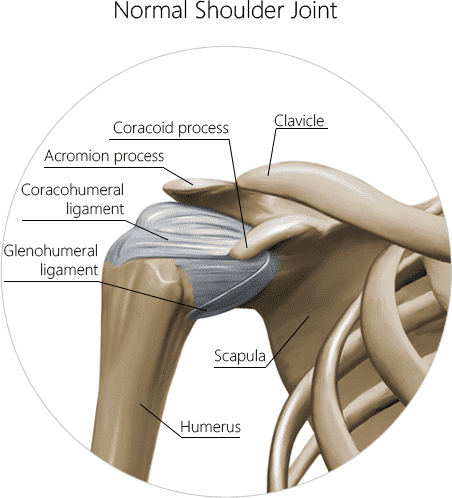 Normal shoulder joint