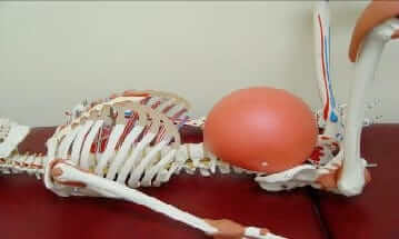 A skeleton with a balloon positioned in its abdomen
