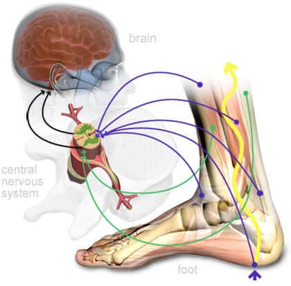 A computerized image showing how foot pain originates