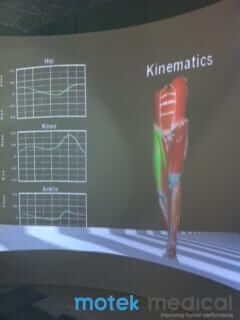Human body model during the kinematics session