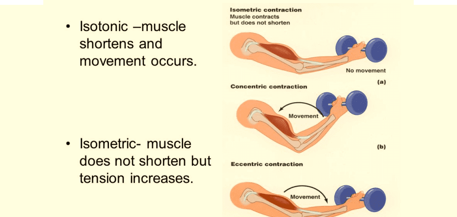 Benefits of Isometric Muscle Contraction Exercises