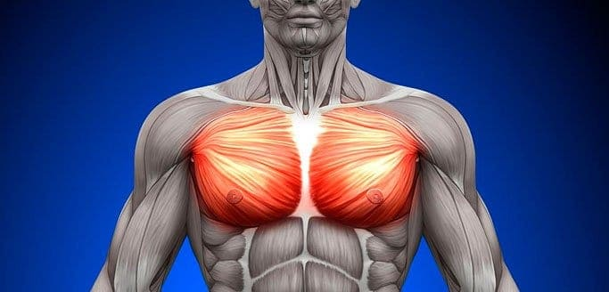 Pectoralis Major Trigger Points: The Cardiac  Copycats Blog  Trigger Point