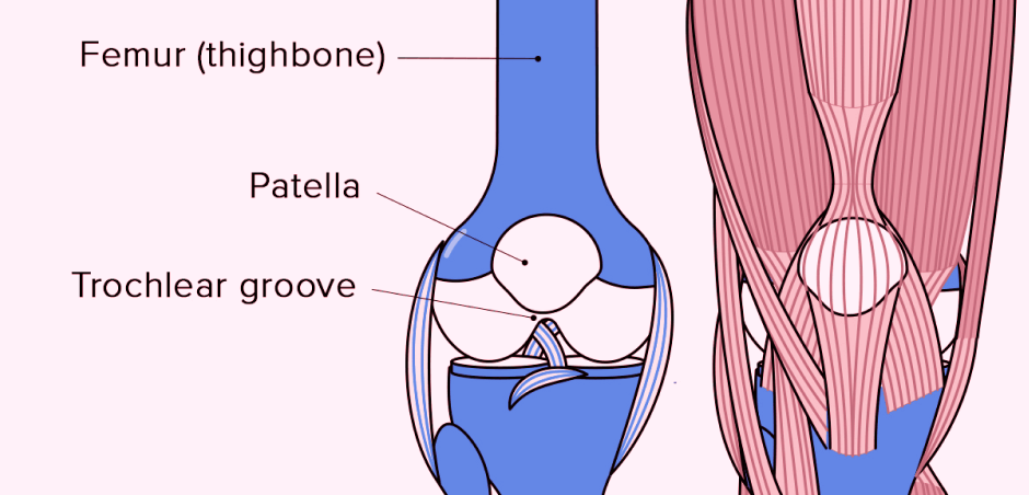 The-Anatomy-of-the-Knee-Joint-1