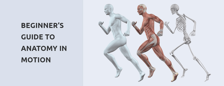 Beginner's Guide to Anatomy in Motion