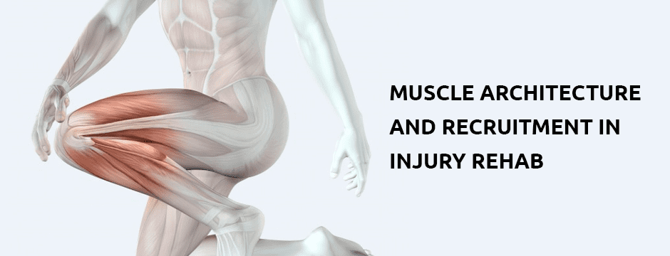 Muscle Architecture and Recruitment in Injury Rehab