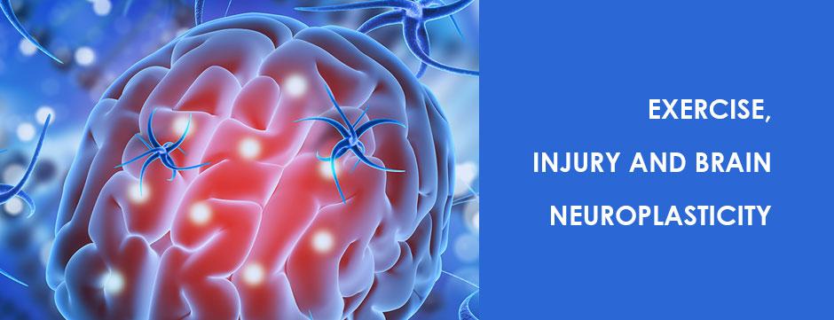 Exercise, Injury and Brain Neuroplasticity Blog