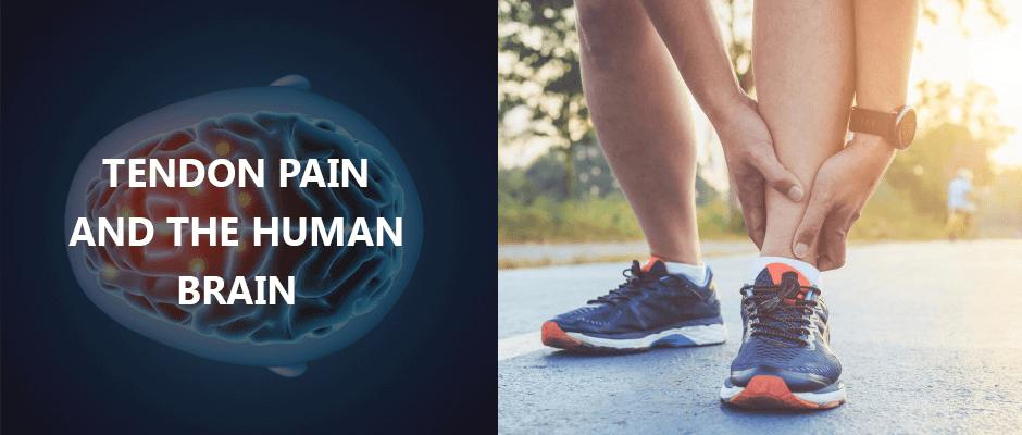 Tendon Pain and the Human Brain Blog